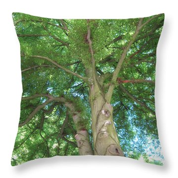 Throw Pillow featuring the photograph Towering Tree by Pema Hou
