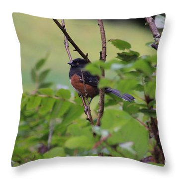 Towhee Keeps Watch On High Throw Pillow by Kym Backland