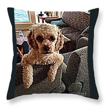 Toy Cockapoodle 1 Throw Pillow