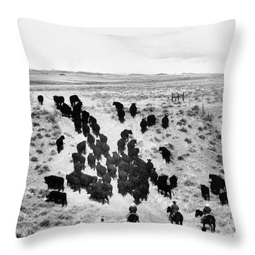 Trailing Cattle Throw Pillow