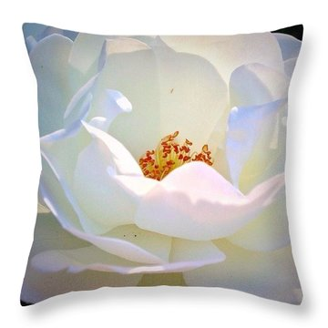 Transcendence White Rose Throw Pillow