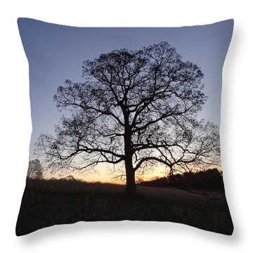 Throw Pillow featuring the photograph Tree At Dawn by Michael Porchik