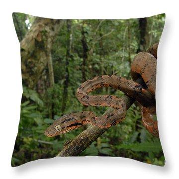 Tree Boa Throw Pillow by Francesco Tomasinelli