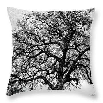 Throw Pillow featuring the photograph Tree By Moon Light by Wanda Brandon