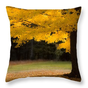 Tree Canopy Glowing In The Morning Sun Throw Pillow by Jeff Folger