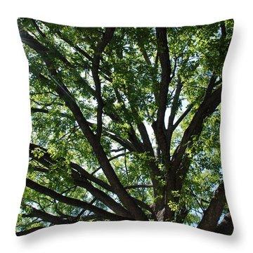 Tree Canopy Sunburst Throw Pillow