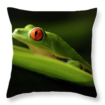 Tree Frog 7 Throw Pillow by Bob Christopher