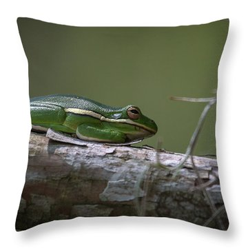 Tree Frog On Branch Throw Pillow by Gregory Daley  PPSA