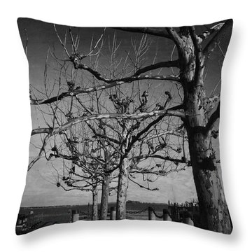 Tree In A Row  Throw Pillow