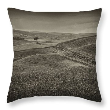 Throw Pillow featuring the photograph Tree In Sienna by Hugh Smith