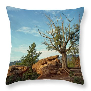 Tree In The Rocks Throw Pillow