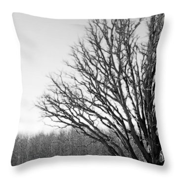 Tree In Winter 2 Throw Pillow