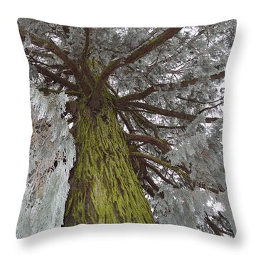 Throw Pillow featuring the photograph Tree In Winter by Felicia Tica