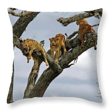 Tree Lions Throw Pillow by Tony Murtagh