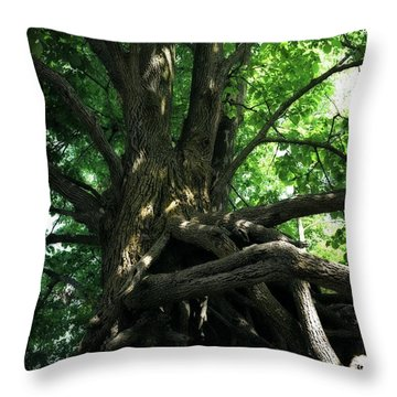 Tree On Pierce Stocking Scenic Drive Throw Pillow by Michelle Calkins