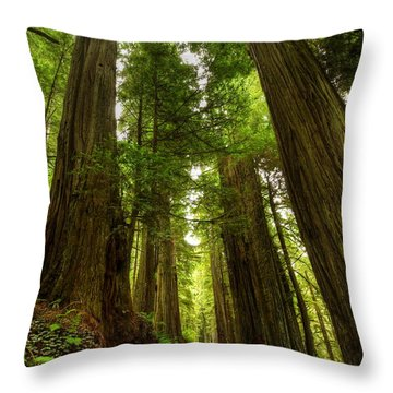 Tree Redwood Ca 3 Throw Pillow by John Brueske