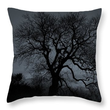 Tree Silhouette Throw Pillow by Ian Mitchell