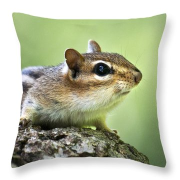 Tree Surfing Chipmunk Throw Pillow by Christina Rollo
