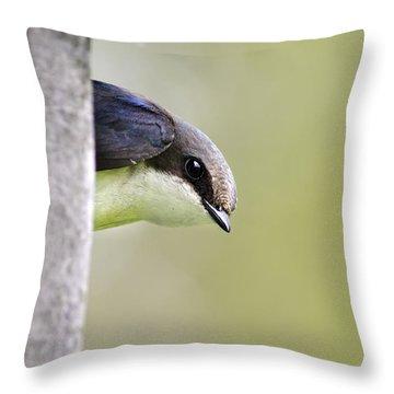 Tree Swallow Closeup Throw Pillow by Christina Rollo