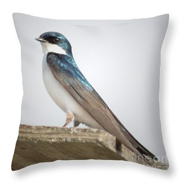 Tree Swallow Portrait Throw Pillow