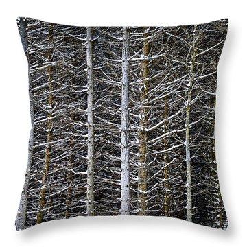 Tree Trunks In Winter Throw Pillow by Elena Elisseeva