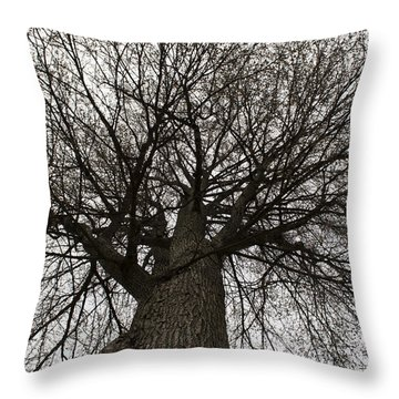 Tree Web Throw Pillow