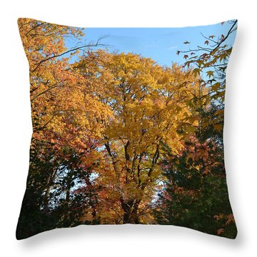 Trees In Fall Throw Pillow