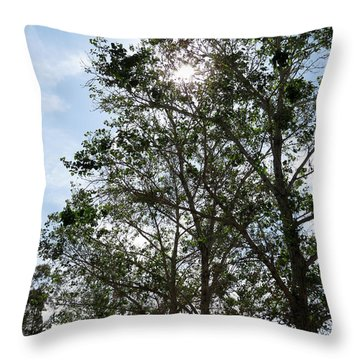 Trees At The Park Throw Pillow by Laurel Powell