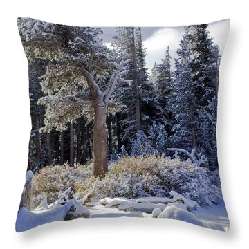 Trees Of Mcleod Throw Pillow by Chris Brannen