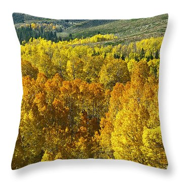 Tri Color Aspen Throw Pillow