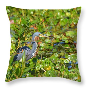 Tri Colored Heron 2 Throw Pillow by Jodi Terracina