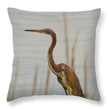 Throw Pillow featuring the photograph Tri-colored Heron  by Bob Sample