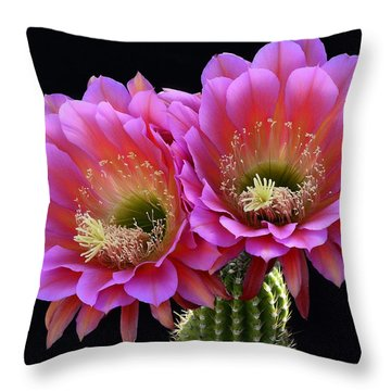 Trichocereus Hybrid - The Flying Saucer  Throw Pillow