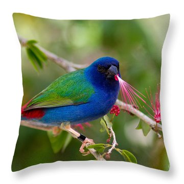 Throw Pillow featuring the photograph Tricolor Parrot Finch by Les Palenik