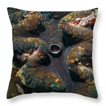Throw Pillow featuring the photograph Tridacna by Aaron Whittemore