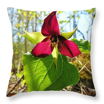 Throw Pillow featuring the photograph Trillium Wild Flower by Sherman Perry
