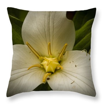 Trillium With Spider Throw Pillow