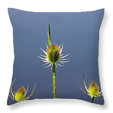 Trio Of Teasels Throw Pillow