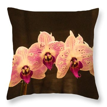 Triple Orchid Arrangement 1 Throw Pillow by Douglas Barnett
