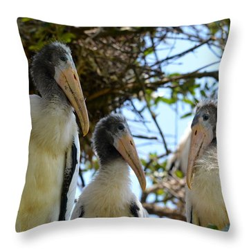 Triplet Wood Stork Nestlings Throw Pillow by Richard Bryce and Family