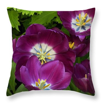 Triumph Tulips Negrita Variety Throw Pillow