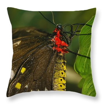 Throw Pillow featuring the photograph Troides Helena Butterfly  by Olga Hamilton