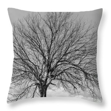 Tropic Winter Throw Pillow by Amar Sheow