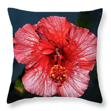 Tropical Burst Subdued Throw Pillow