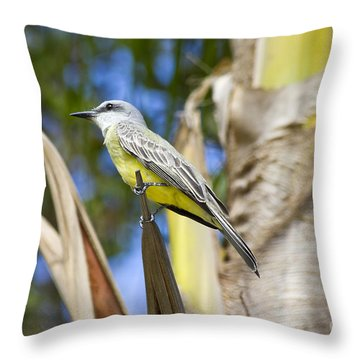 Tropical Kingbird Throw Pillow by Teresa Zieba