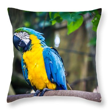 Tropical Parrot Throw Pillow by Sara Frank