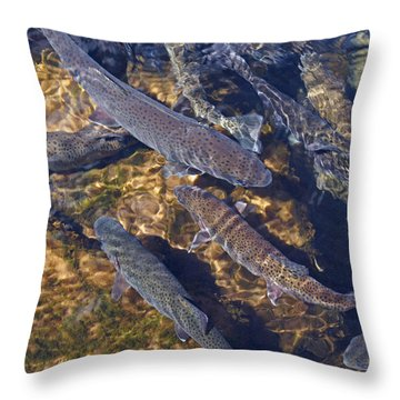 Trout Prints Rainbow Lake River Trout Throw Pillow by Baslee Troutman