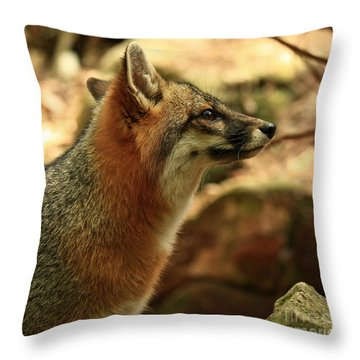 Truly Captivated By The Rare Grey Fox Throw Pillow by Inspired Nature Photography Fine Art Photography
