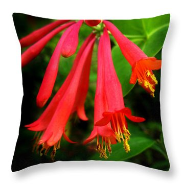Wild Trumpet Honeysuckle Throw Pillow by William Tanneberger