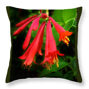Wild Trumpet Honeysuckle Throw Pillow